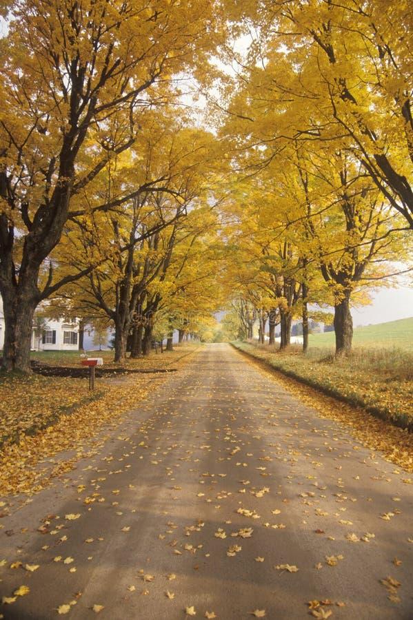 As folhas estão girando amarelo ao lado de uma estrada rural em Peacham, Vermont fotos de stock royalty free