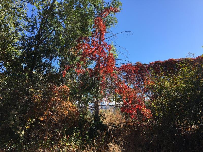 As folhas estão mudando às cores bonitas da queda imagem de stock