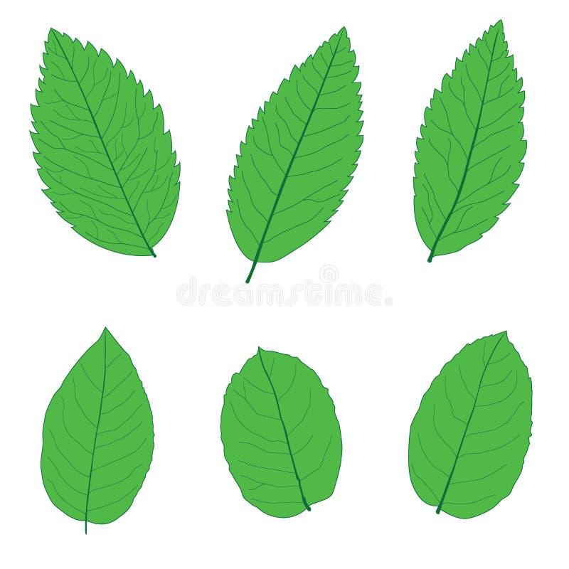 As folhas esverdeiam para colorir as folhas frescas no fundo branco ilustração royalty free