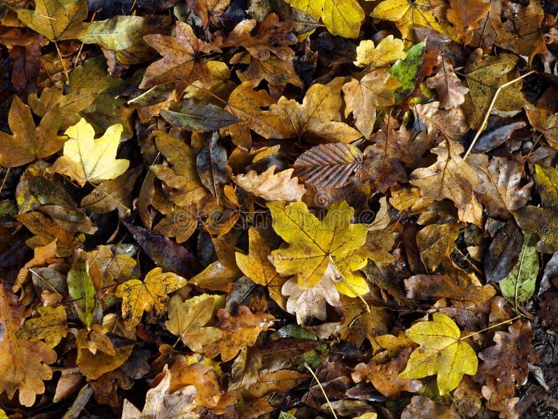 As folhas molhadas e enlameadas da queda aglomeraram-se na terra imagem de stock royalty free