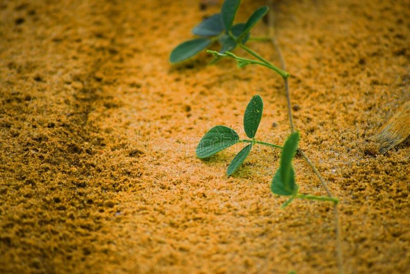 As folhas na areia olham bonitas foto de stock royalty free