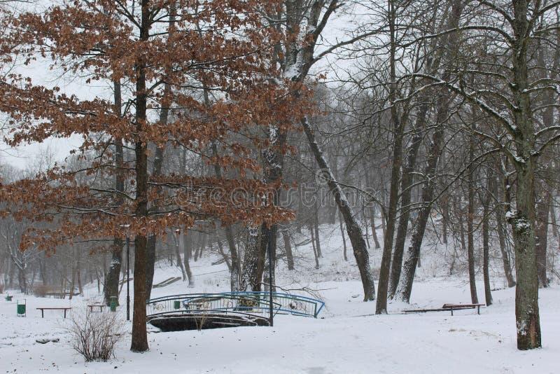 As folhas na neve fotografia de stock