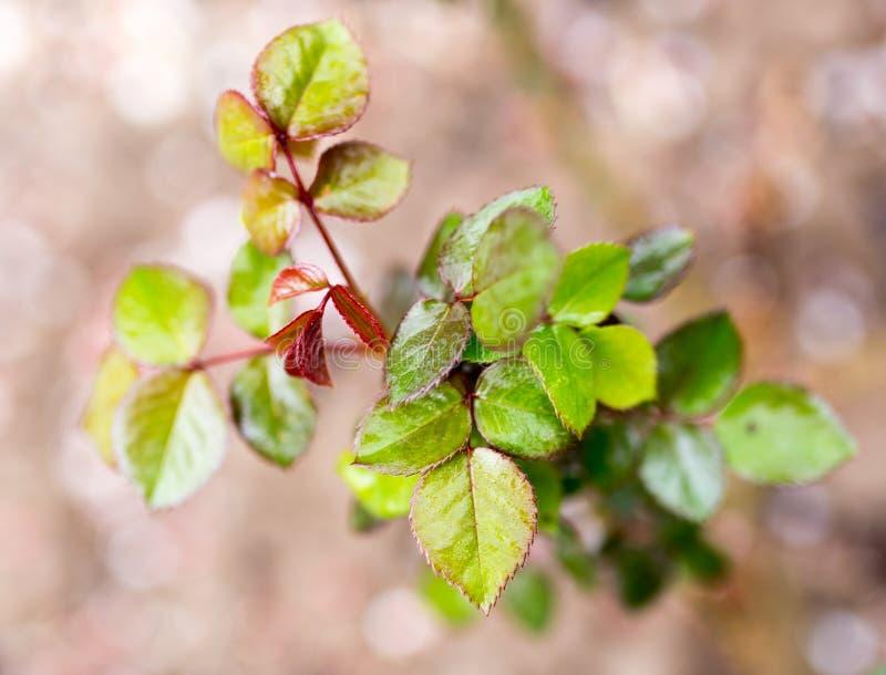 As folhas na planta após a chuva imagens de stock