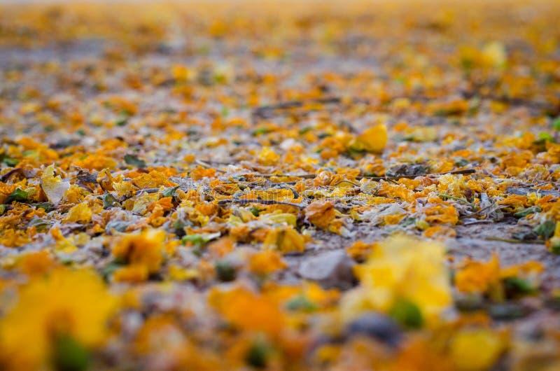 As folhas na terra fotografia de stock royalty free