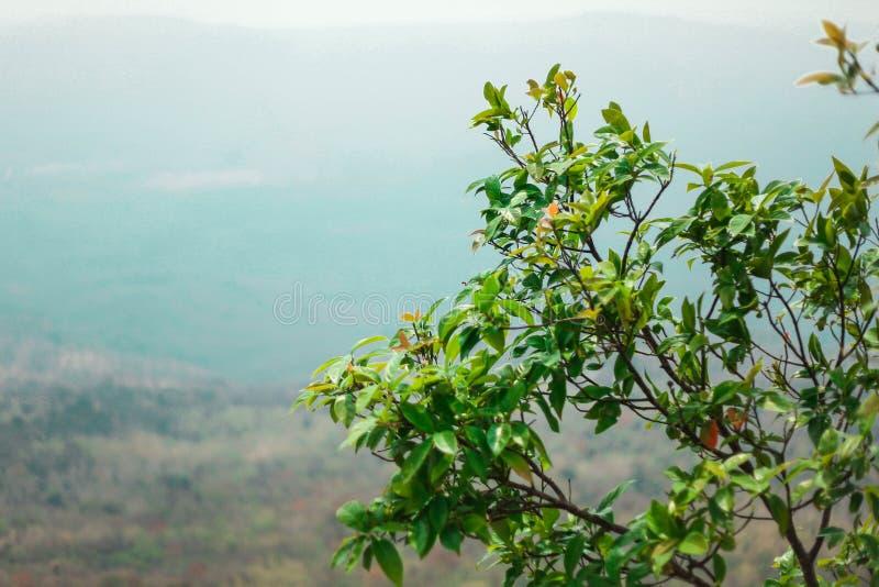 As folhas, o ramo e a ?rvore alta est?o a porca da cesta dominante em dire??o ao c?u imagem de stock royalty free