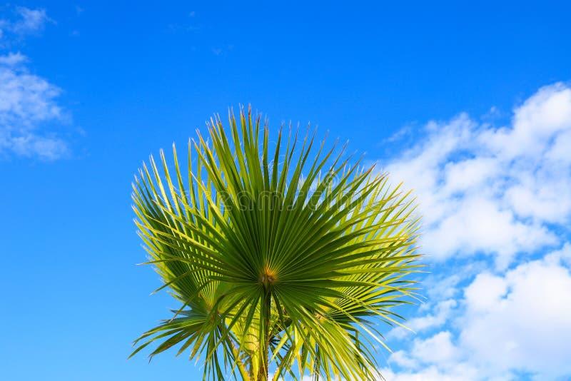 As folhas pitorescas de uma palmeira bonita na praia de um recurso tropical, iluminada pelo sol contra o céu fotografia de stock royalty free