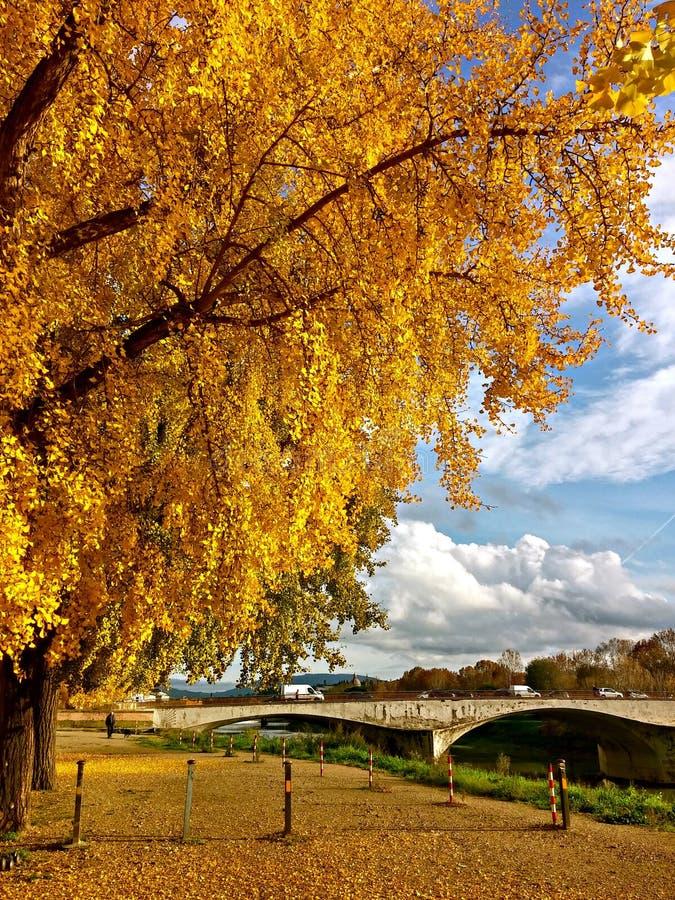 As folhas são amarelas imagem de stock royalty free