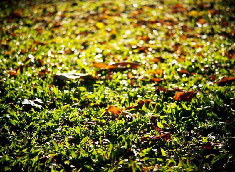 As folhas secadas folheiam caindo no assoalho do jardim ou da selva foto de stock royalty free