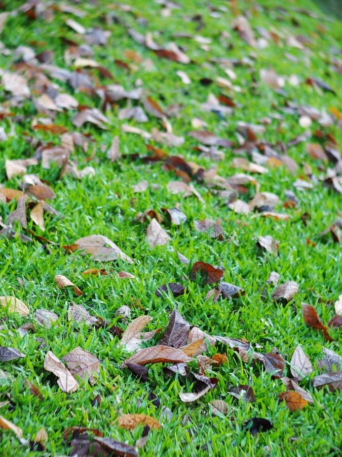 As folhas secadas naturais folheiam caindo no assoalho do jardim ou da selva fotos de stock royalty free
