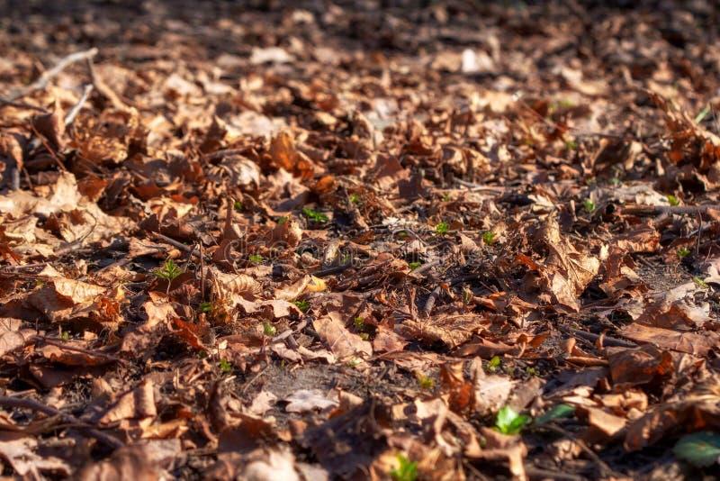 As folhas secas caídas estão encontrando-se na terra foto de stock royalty free