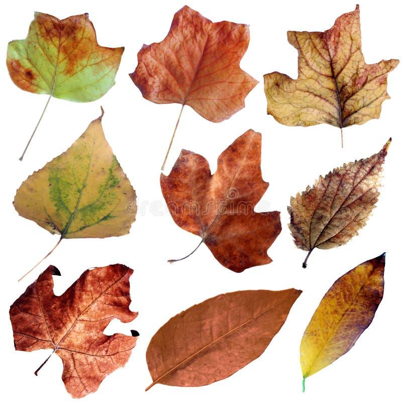 As folhas secas do outono ajustaram II ilustração stock