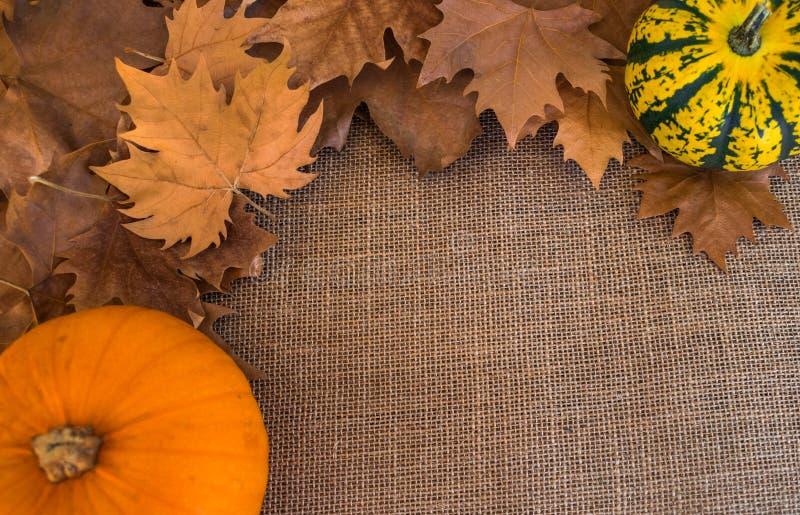 As folhas secas do outono no saco surgem com abóboras fotos de stock royalty free