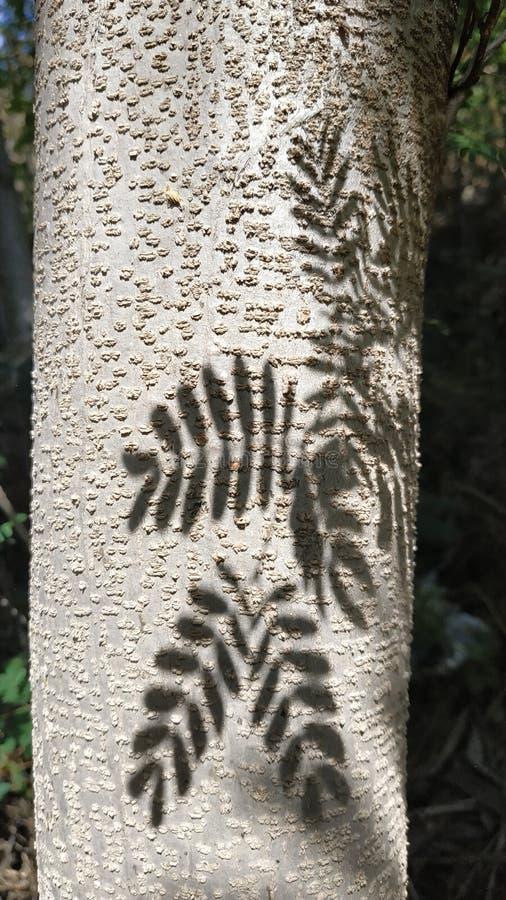 As folhas sombreiam em um tronco de árvore foto de stock