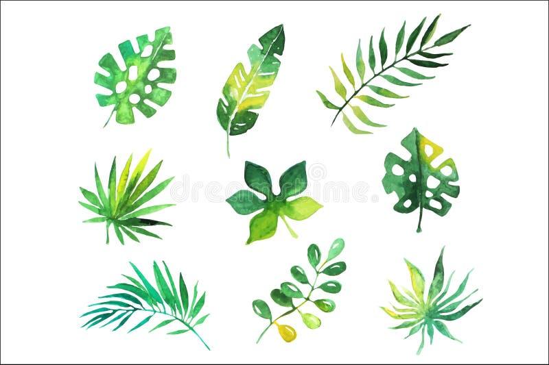 As folhas tropicais ajustaram-se, árvores da selva, ilustrações botânicas do vetor da aquarela ilustração do vetor