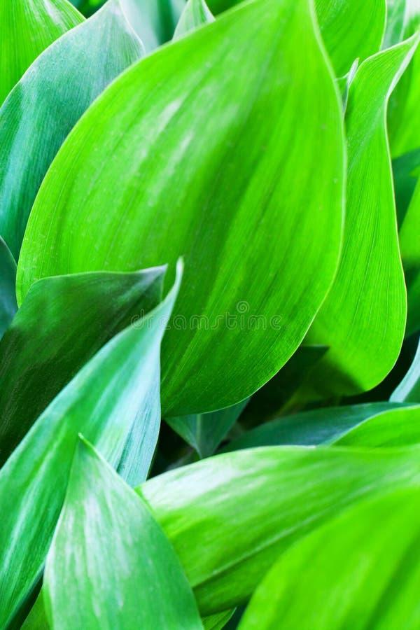 As folhas verde-clara fecham-se acima do fundo artístico abstrato, contexto macro da folha fresca, teste padrão floral botânico,  imagem de stock