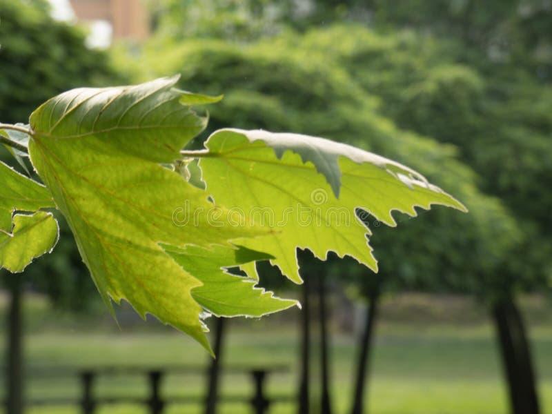 As folhas verdes moveram-se pelo vento imagens de stock