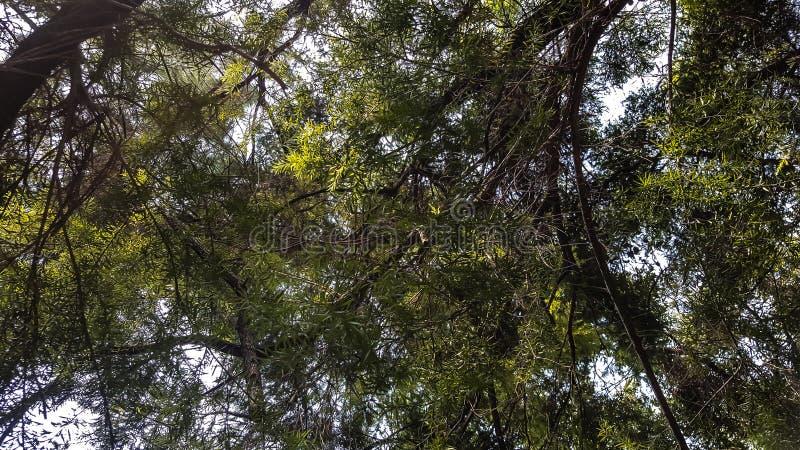 As folhas verdes na foto de baixo em uma manhã ensolarada sentem acalmando-se foto de stock