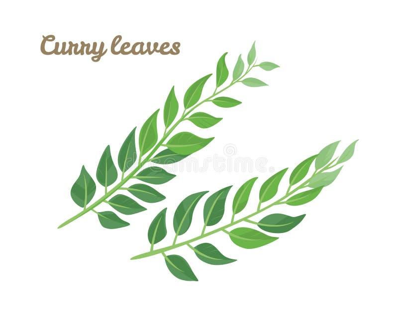 As folhas verdes surram isolado no fundo branco imagem de stock