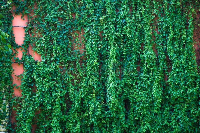 As folhas verdes teste padrão & textura de plantas verticais fotos de stock royalty free