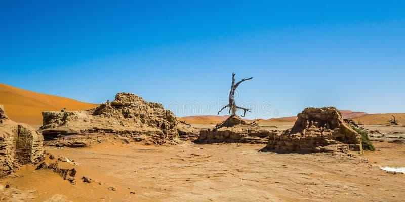 As formações da erosão da argila em Deadvlei, Sossusvlei foto de stock royalty free
