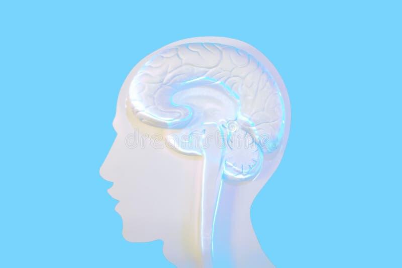 As formas e o cérebro da cara são os componentes principais do trabalho ilustração royalty free