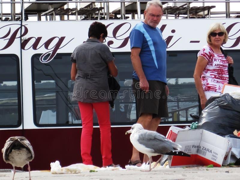 As gaivotas criam uma confusão foto de stock