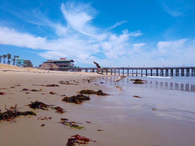 As gaivotas do cais de Ventura voam na praia no oceano imagens de stock