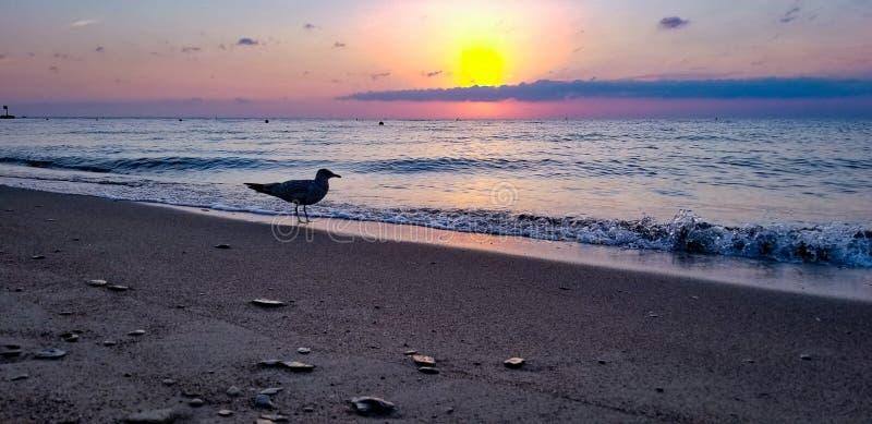 As gaivotas Também Adoram Os Sunsets fotografia de stock