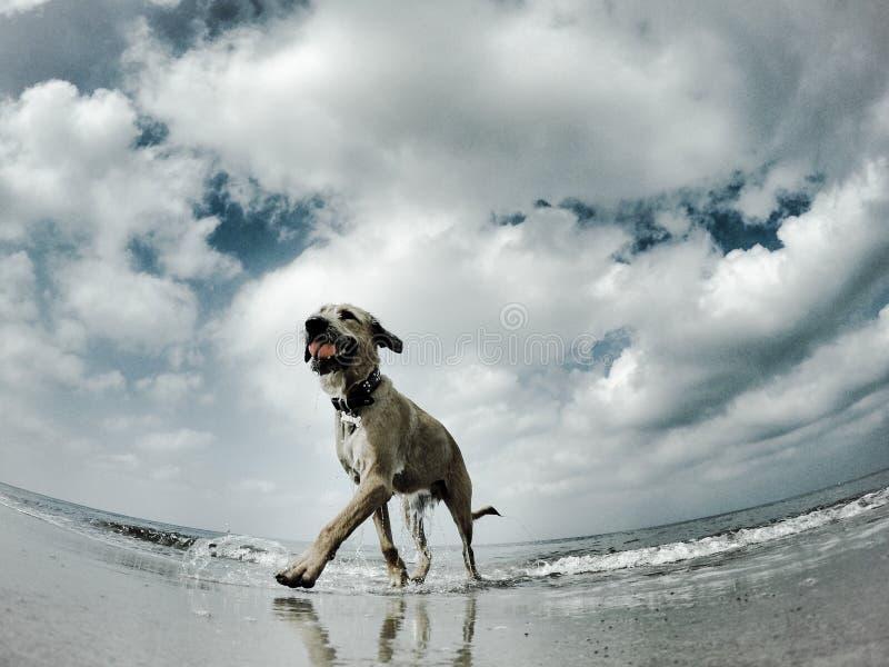 As gaivotas veem a um cão