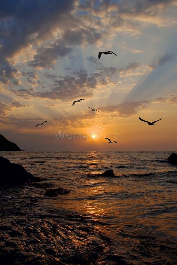 As gaivotas voam de encontro a um sol de aumentação fotografia de stock