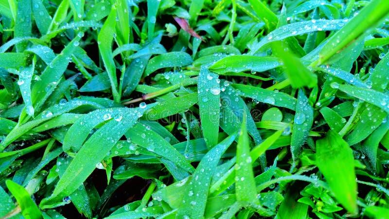 As gotas de orvalho nas folhas imagem de stock