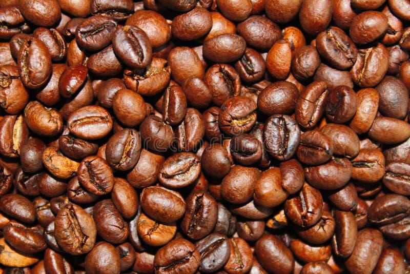 As grões da goma-arábica do café aterram bebidas Brasil do alimento de café da manhã fotos de stock