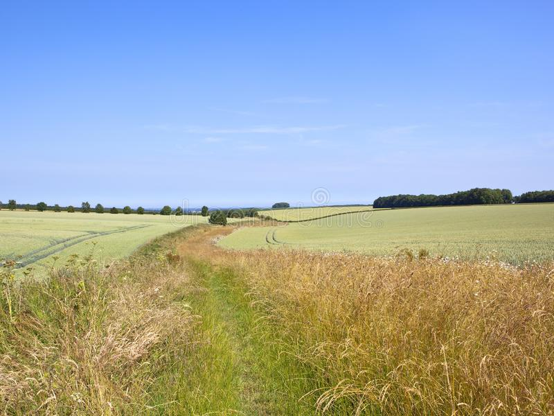 As gramas secas e os wildflowers por campos de trigo verdes em um verão ajardinam fotos de stock