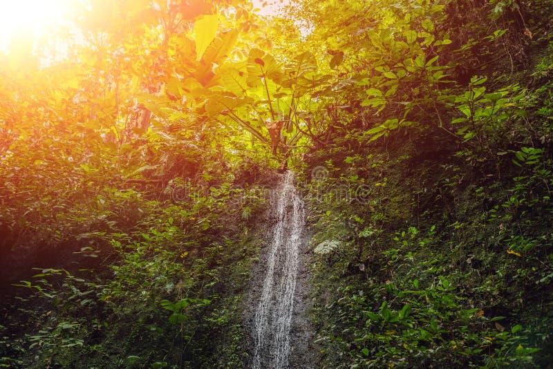 As grandes cachoeiras na floresta tropical verde focalizam na cachoeira Bali com luz solar foto de stock