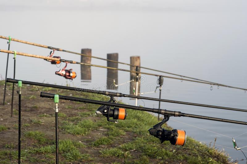 As hastes da carpa alinharam em seguido nos suportes com em antecipação a uma mordida da carpa Fundo fotografia de stock