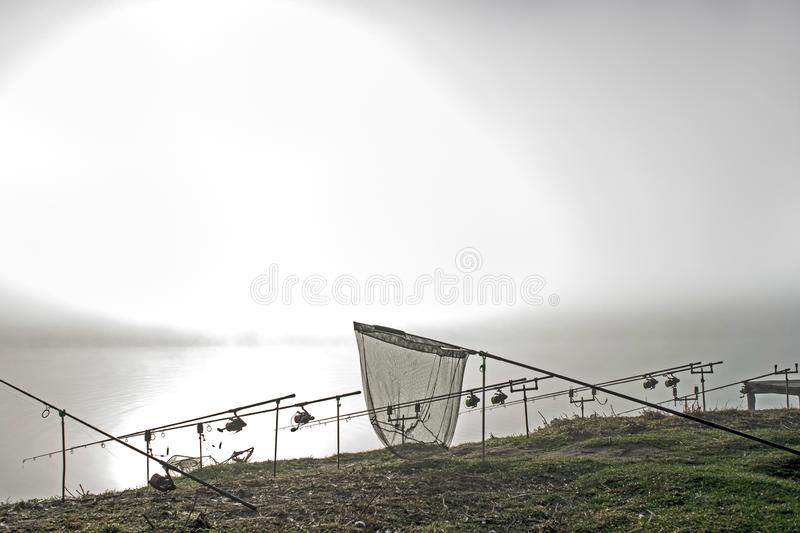 As hastes da carpa alinharam em seguido nos suportes com um recolhimento na névoa da manhã em antecipação a uma mordida da carpa  fotos de stock