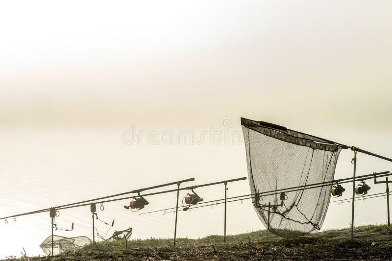 As hastes da carpa alinharam em seguido nos suportes com um recolhimento na névoa da manhã em antecipação a uma mordida da carpa  foto de stock royalty free
