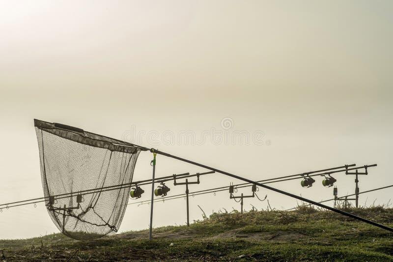 As hastes da carpa alinharam em seguido nos suportes com um recolhimento na névoa da manhã em antecipação a uma mordida da carpa  fotografia de stock
