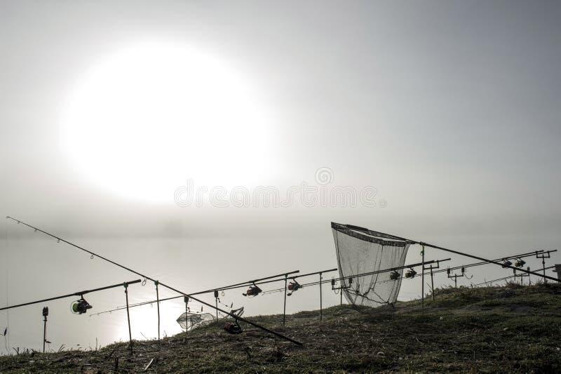 As hastes da carpa alinharam em seguido nos suportes com um recolhimento na névoa da manhã em antecipação a uma mordida da carpa  fotos de stock royalty free