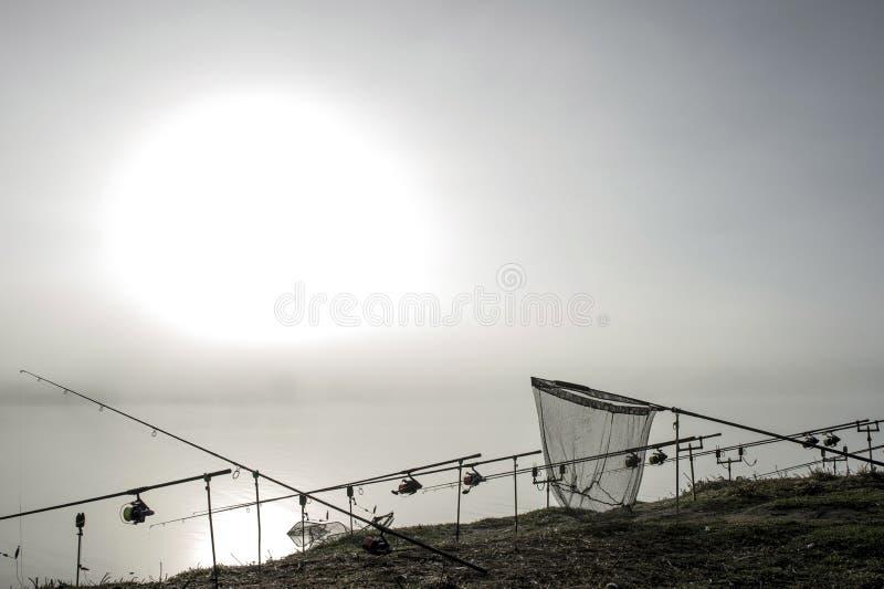 As hastes da carpa alinharam em seguido nos suportes com um recolhimento na névoa da manhã em antecipação a uma mordida da carpa  imagem de stock