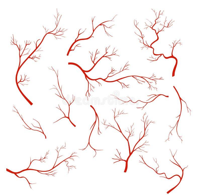 As ilustrações do vetor ajustaram-se das veias e da embarcação, capilares vermelhos, artérias do sangue isoladas no fundo branco ilustração do vetor