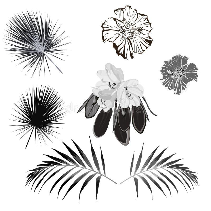 As ilustrações tiradas mão gravadas de flores ornamentado e de folhas podem facilmente ser separadas e removido ilustração royalty free