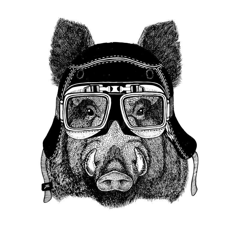 As imagens do vintage do porco para o t-shirt projetam para a motocicleta, bicicleta, velomotor, clube do 'trotinette', clube aer ilustração royalty free