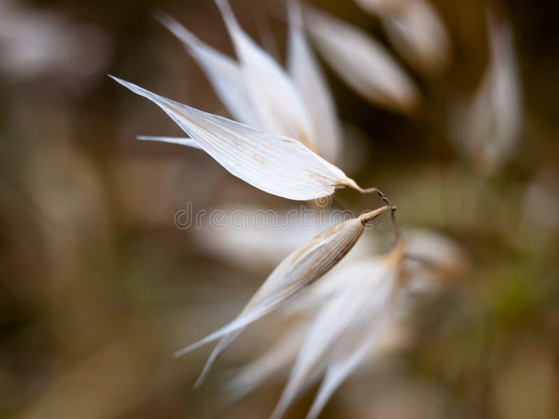 As lâminas das pétalas das cabeças de flor branca fecham-se acima de original foto de stock