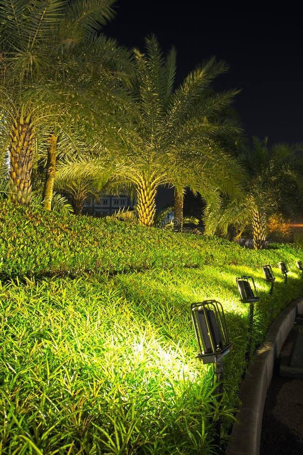 As lâmpadas iluminaram plantas e jardim imagem de stock royalty free