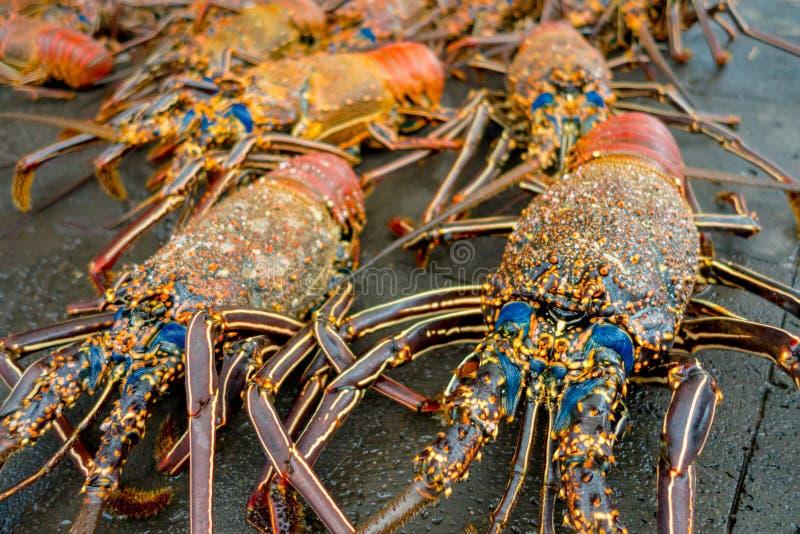As lagostas frescas de Santa Cruz no marisco do mercado fotografaram no mercado de peixes, Galápagos foto de stock