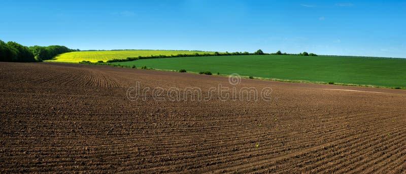 As linhas de campo da exploração agrícola de terra arável e de rapeflowerfield ajardinam imagem de stock royalty free