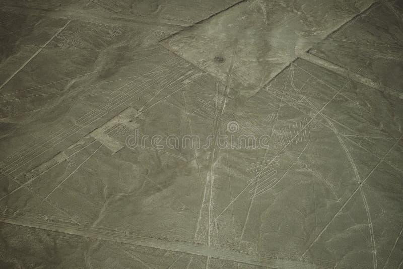 As linhas famosas de Nazca no Peru, aqui você pode ver a figura de um condor imagem de stock