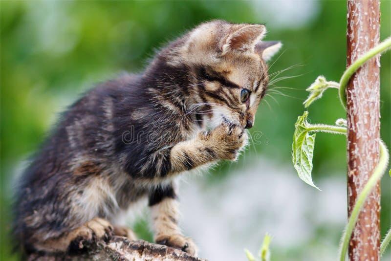 As listras bronzeiam o gatinho bonito que senta-se em um coto imagens de stock royalty free