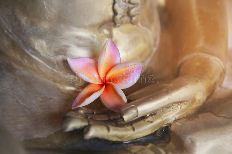As máscaras do rosa e das pétalas amarelas 5 da flor, flor cor-de-rosa do plumeria, são colocadas na mão do bronze da Buda fotografia de stock royalty free